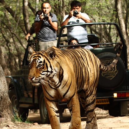 Jungle Safari in Kabini