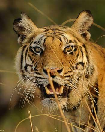 Jungle resort Kabini & Wildlife in Kabini